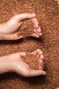 農家の手に玄米がたくさん入っている