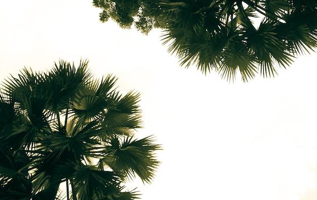 日光に逆らって多くの緑の美しいヤシの木。バリ。休暇の概念。