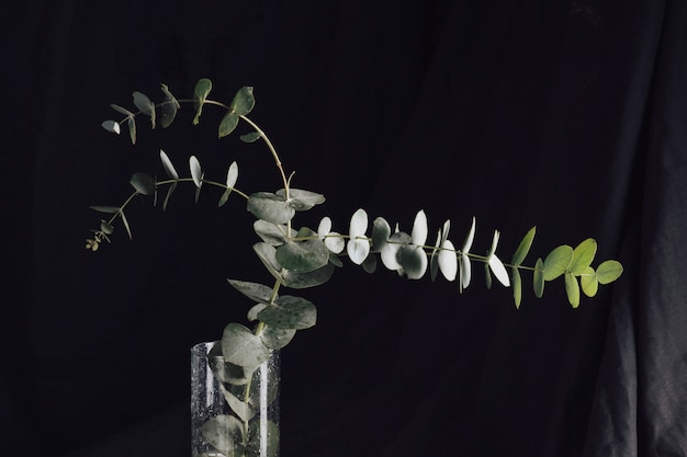 Many green leaves on twigs in vase