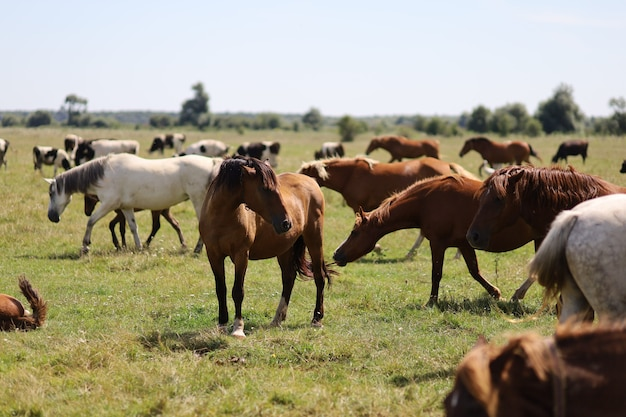 夏には多くの馬が農場で放牧します