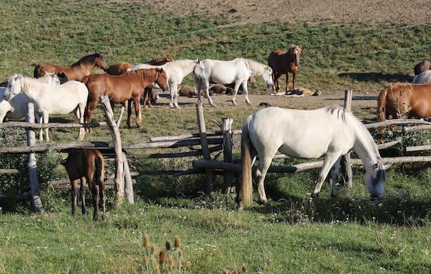 多くの馬が農場で放牧している