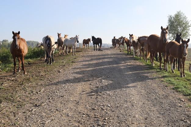 多くの馬が田舎道に立っています