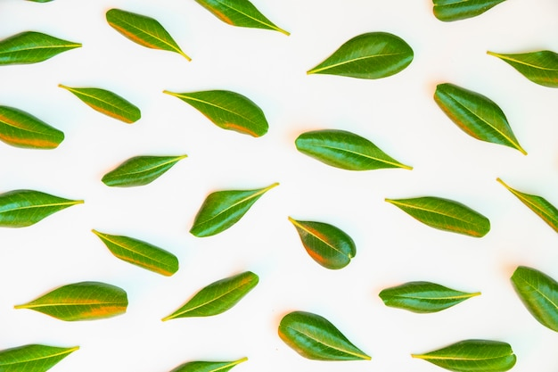 Many isolated green leaves pattern on white background