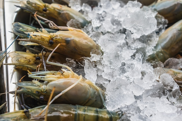 Many large fresh shrimps on ice, in a supermarket. fresh raw seafood in asian traditional fresh market