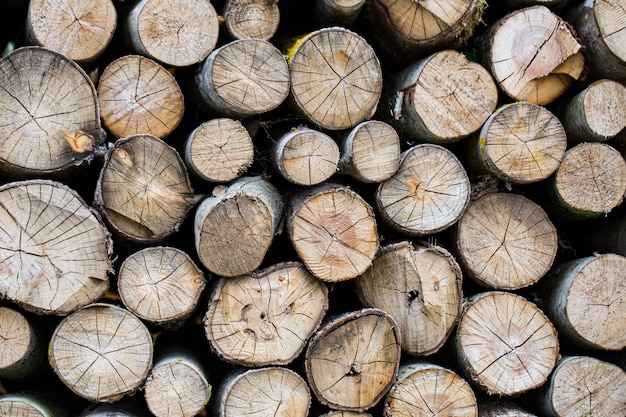 Many logs are arranged in rows