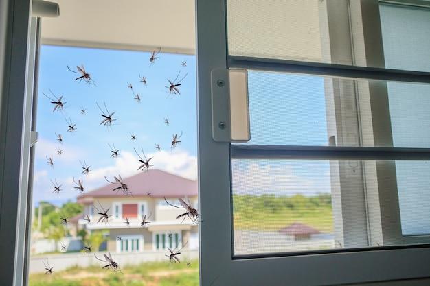 蚊帳を開けている間、たくさんの蚊が家に飛んでくる