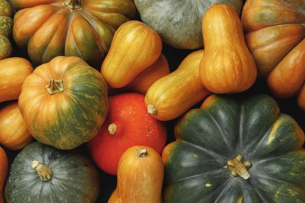 Многие разноцветные тыквы, осенний сезонный декоративный фон крупным планом
