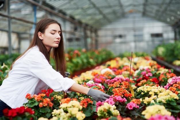多くの植物。温室で花の世話をしている女性労働者。