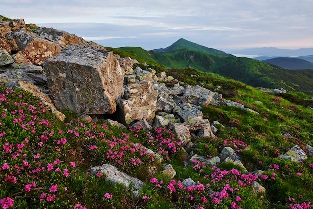 Многие скалы. величественные карпаты. красивый пейзаж. захватывающий вид.