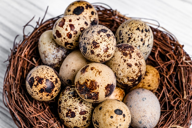 Many organic fragility quail eggs with brown spots in the nest of twigs.