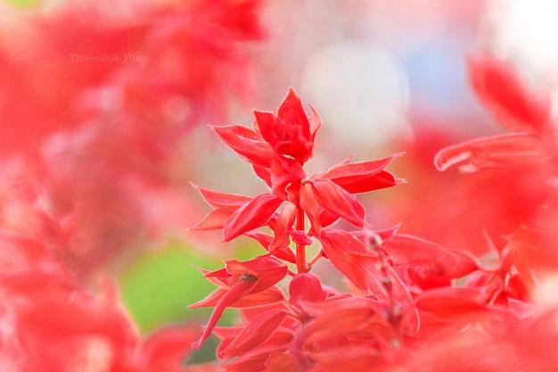 Много фотографий цветов. коллаж. выборочный фокус
