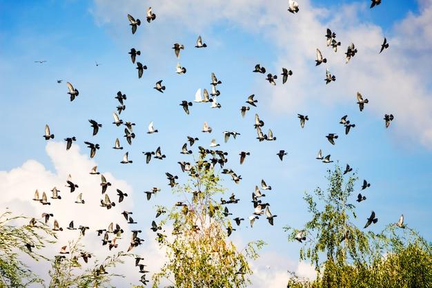 Многие голуби летают на фоне облаков в голубом небе.