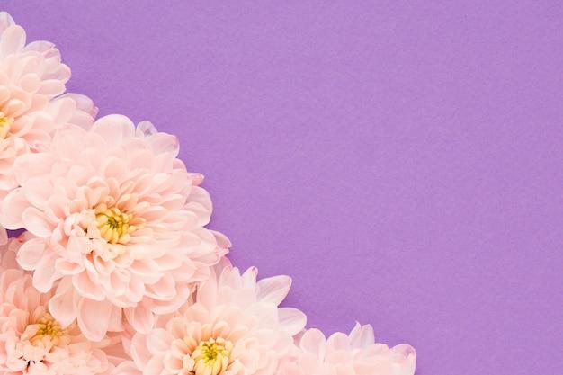 中心が黄色のピンクの菊の花がたくさん