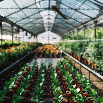 Many potted plants growing in greenhouse