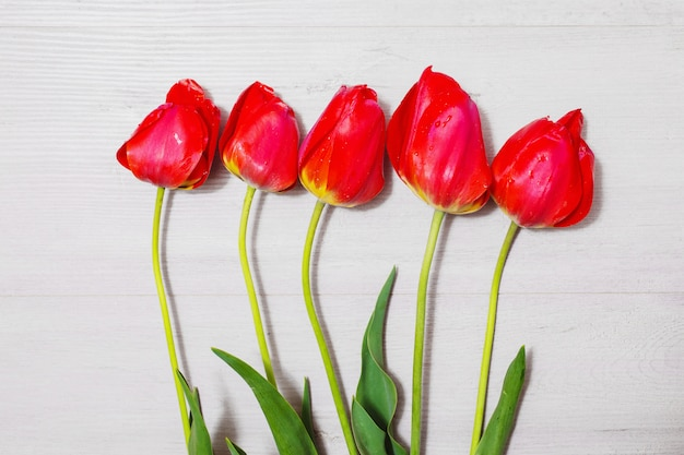 Many red tulips lie on a light wooden background. spring flowers. floral background