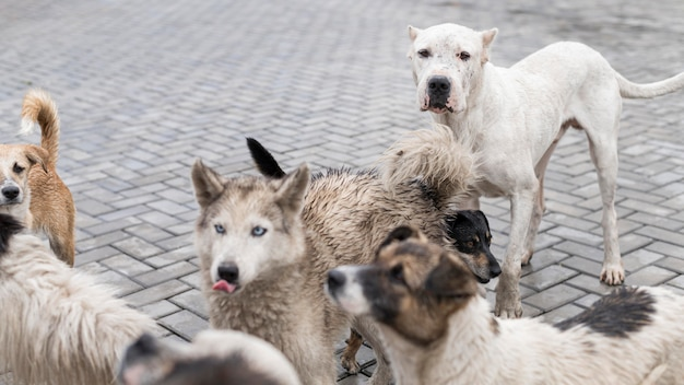 養子縁組を待っている避難所で多くの救助犬