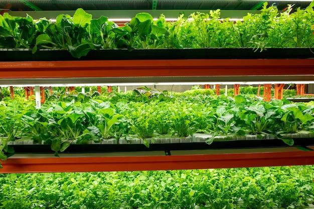 대형 현대 수직 농장이나 온실 내부의 선반에서 자라는 다양한 종류의 양배추의 녹색 묘목이 여러 줄로 늘어서 있습니다.