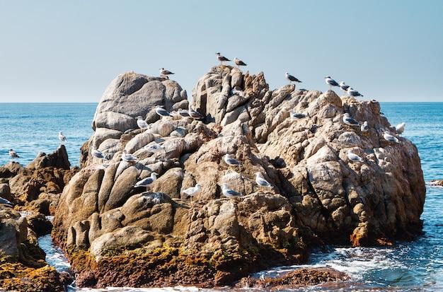 Многие чайки сидят на скалах в море