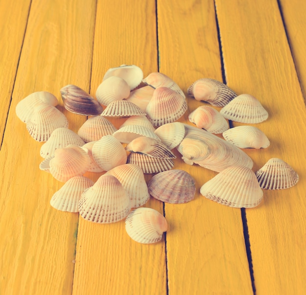 Many sea shells on a yellow wooden table