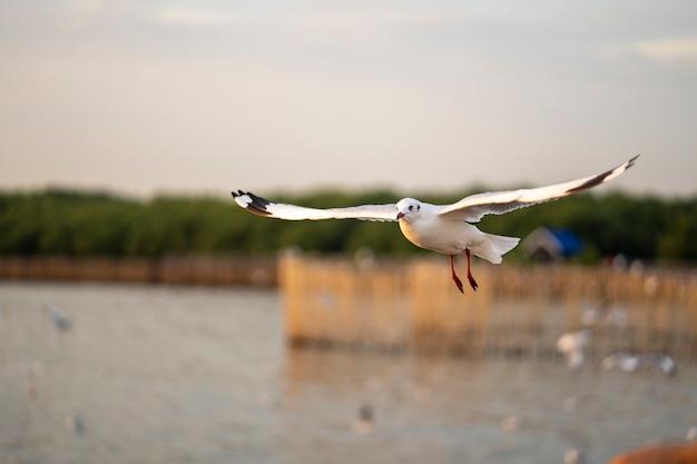 Many seagulls fly happily.