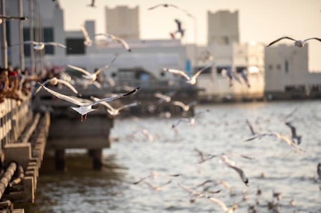 Many seagulls fly happily