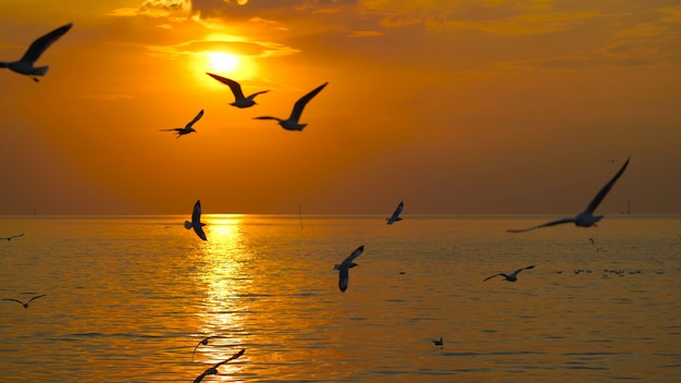 Many seagulls fly in the sky above the sea during the sunset.