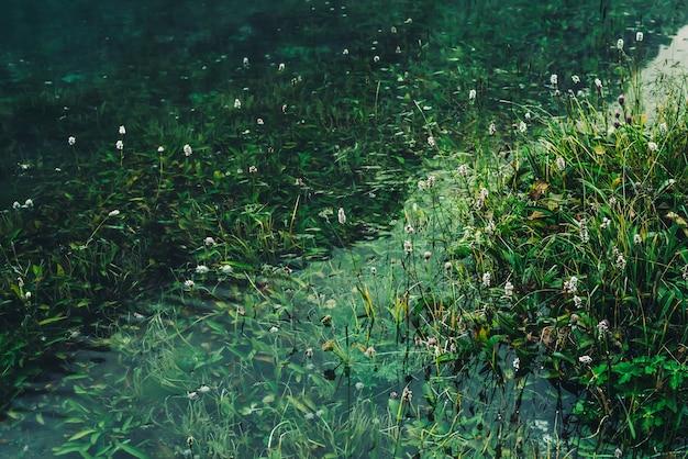 홍수 후 수중 푸른 잔디 사이 맑은 물에 많은 작은 꽃 녹색 자연