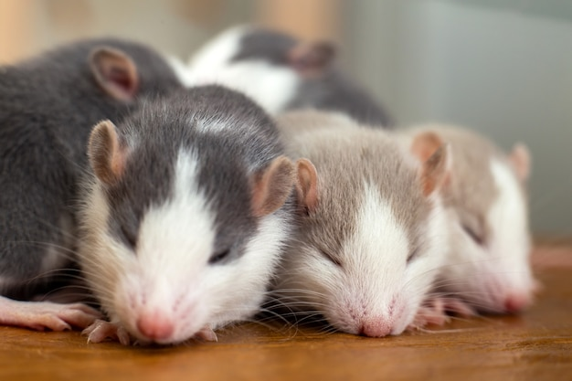 多くの小さな面白い赤ちゃんネズミが一緒に暖まります。