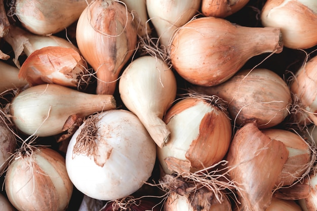 Many small onion bulbs for planting, different varieties of onions