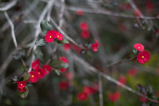 Many small red flowers on the branches of a tropical tree