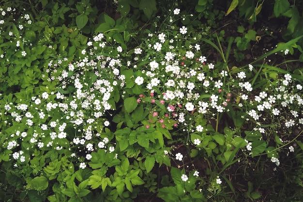 녹지 배경에 있는 많은 작은 흰색 꽃, 우아한 석고소필라 꽃은 흐릿한 배경으로 클로즈업됩니다. 여름 식물. 디자인 또는 질감을 위한 자연 배경입니다.