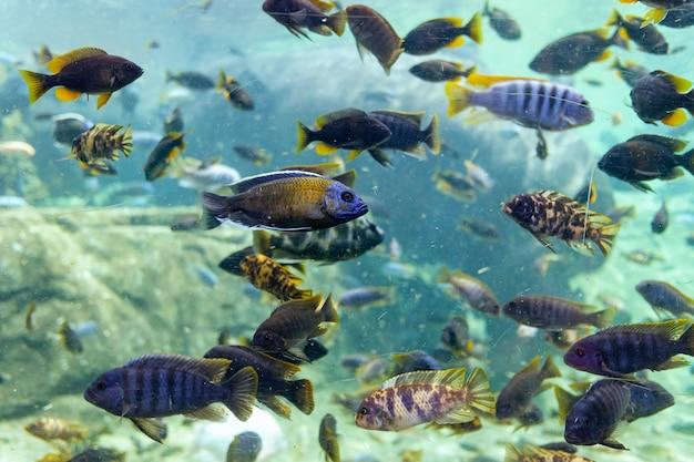 Многие тропические рыбки плавают в грязном аквариуме с мутной водой.