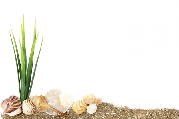 Many white, brown and orange sea shells with green seaweed pile on sand isolated on white background