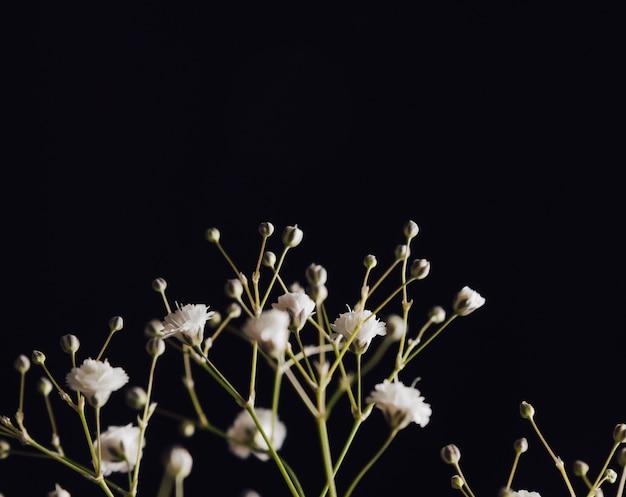 나뭇 가지에 많은 하얀 신선한 꽃