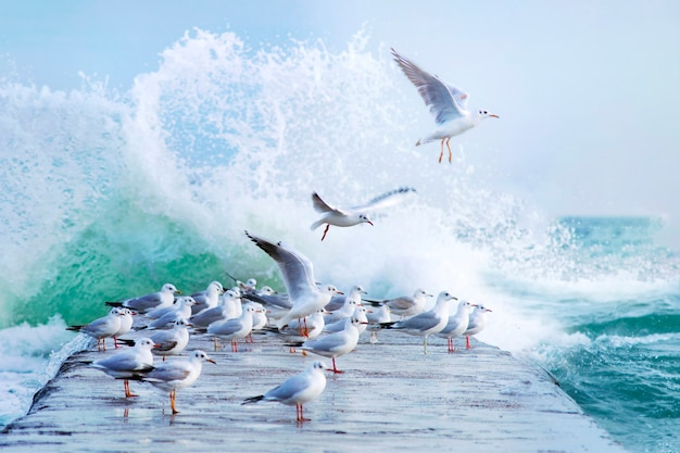 Many white gulls on the pier in a storm
