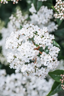 Many white wild blooms
