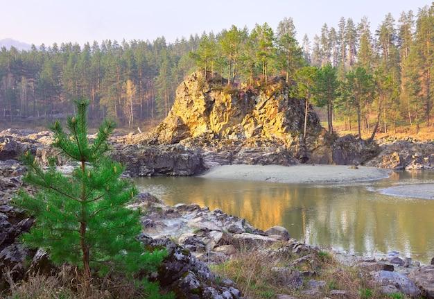カトゥニ川の岩だらけの土手にあるアルタイ山脈の松の木のマンジェロク急流