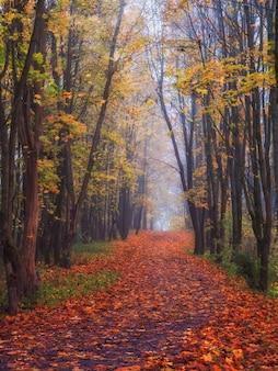 神秘的な森の中を落ち葉のあるカエデの路地。素晴らしい秋の霧の風景。垂直方向のビュー。