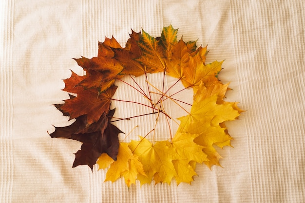 Maple bright yellow red leaves on a white background beautiful fall cozy autumn concept