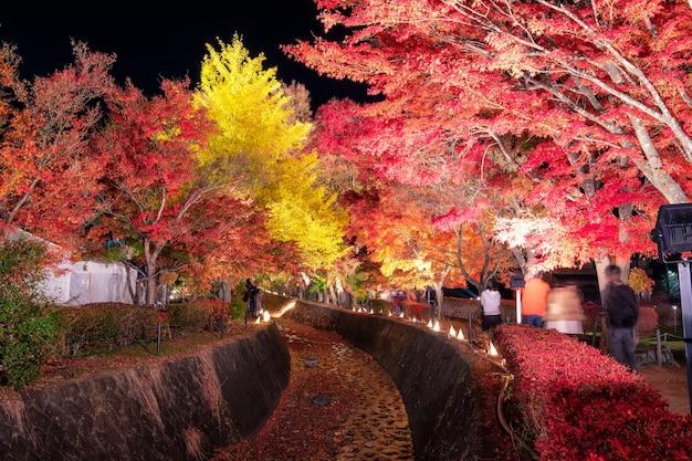 밤에 전통 축제에 가을 시즌에 단풍 복도