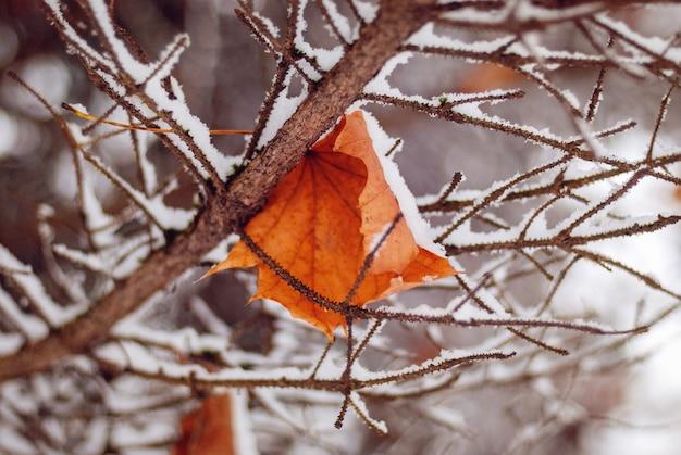 Опавший лист клена на ветвях деревьев, покрытых первым снегом
