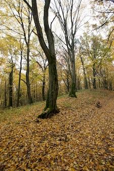Maple foliage in autumn