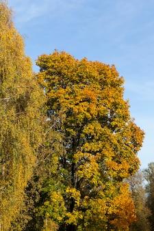Кленовая листва осенью