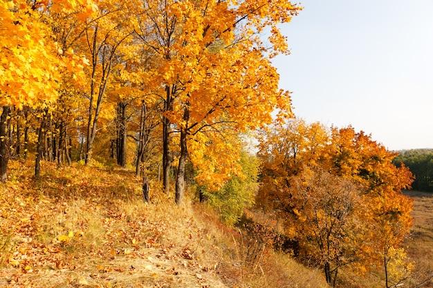 Кленовый лес осенью
