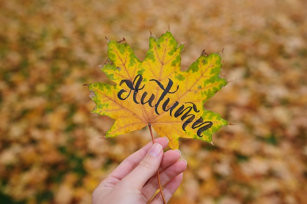 Maple leaf in autumn park with calligraphic word autumn