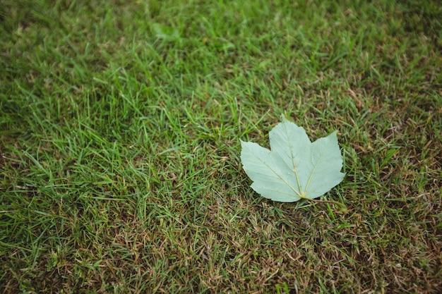 녹색 잎에 떨어진 단풍 잎