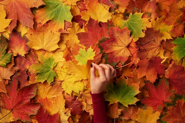 Maple leaf in girl hands. hello autumn. abstract background.