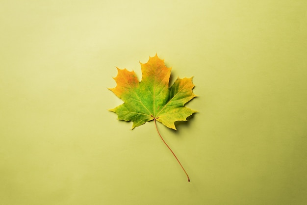 Maple leaf on green background with copy space.