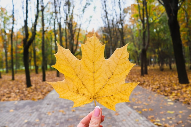 공원에서 단풍의 배경에 대 한 여자 손에 메이플 리프 가을 분위기