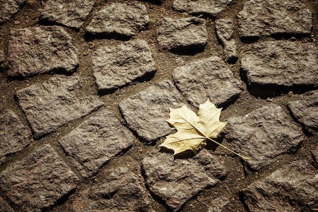 石舗装スラブの背景にカエデの葉
